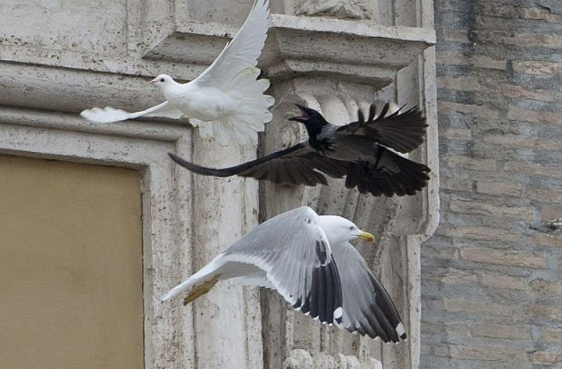 2014 Vatican_crow and gull with dove